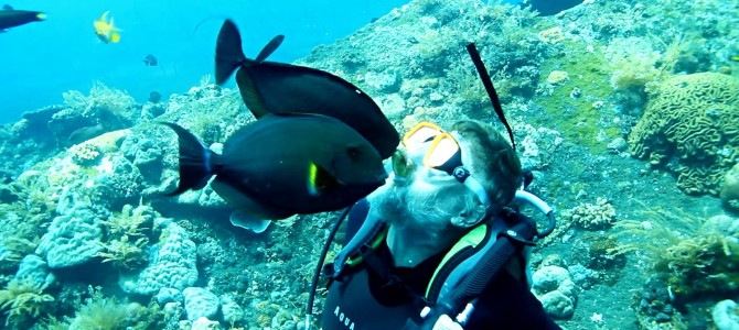 Valentýnský polibek? Potápění v Tulambenu s krmením ryb.